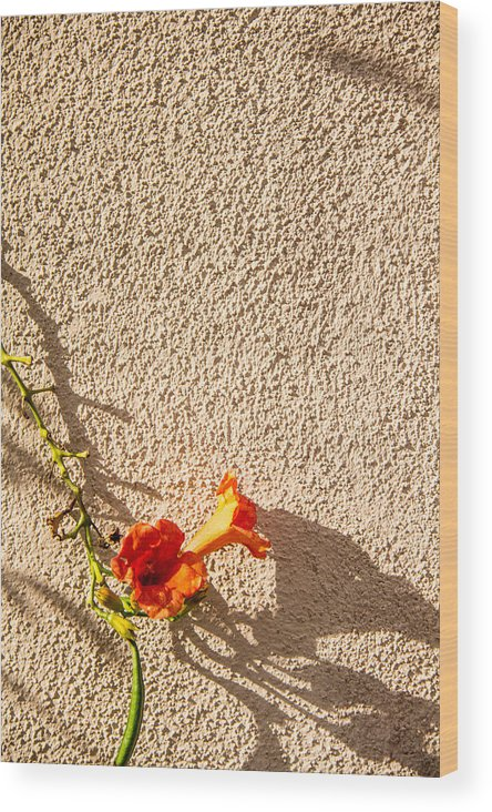 Flower Wood Print featuring the photograph Zen Flower by Gerry Fortuna
