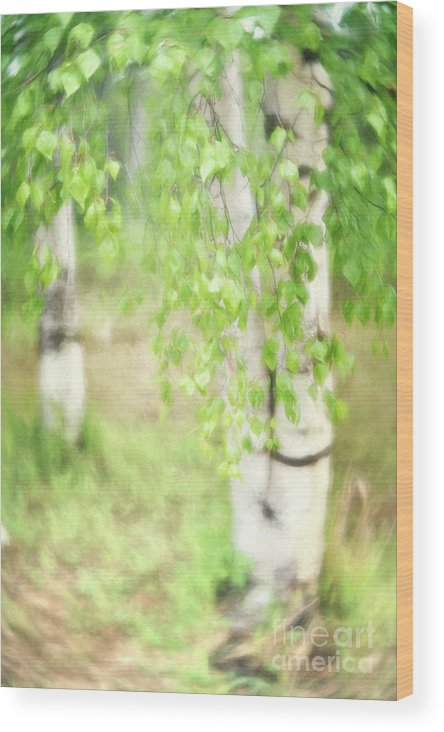 Green Wood Print featuring the photograph Birch In Spring by Priska Wettstein