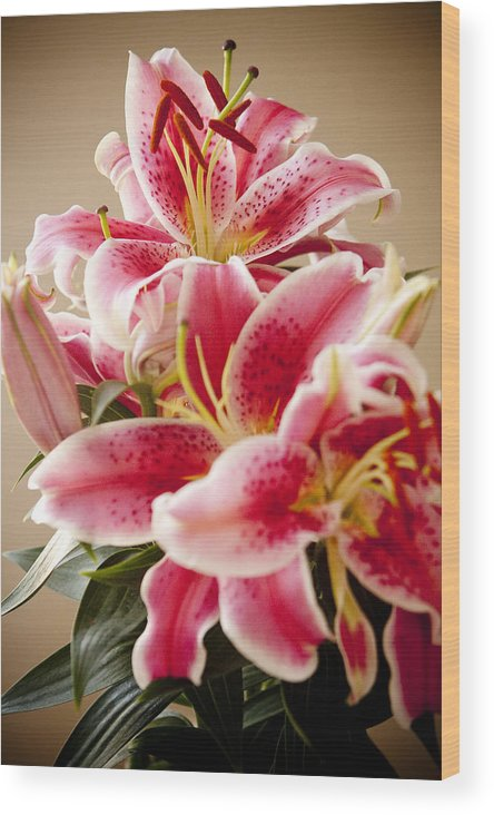 Flora Wood Print featuring the photograph Graceful Lily Series 13 by Olga Smith