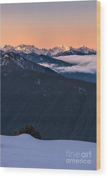 Olympic National Park Wood Print featuring the photograph Hurricane Ridge At Sunrise In Olympic National Park Washington by Brandon Alms