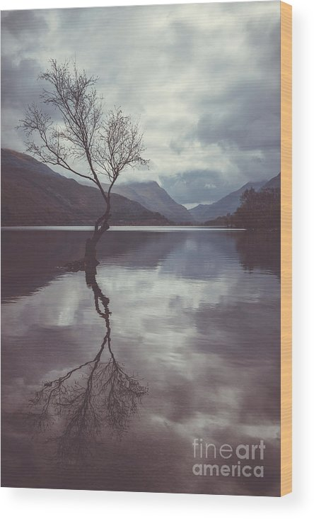 Landscape Wood Print featuring the photograph Lone Tree At Llyn Padarn by Amanda Elwell