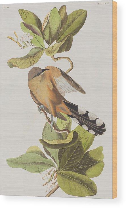 Mangrove Cuckoo Wood Print featuring the painting Mangrove Cuckoo 1 by John James Audubon