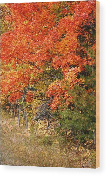 Fall Wood Print featuring the photograph Maple Fire by Joni Strickfaden
