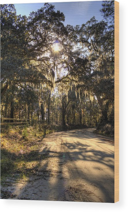 Live Oak Wood Print featuring the photograph Southern Oak Shadows by Dustin K Ryan