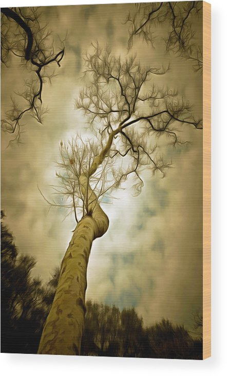 Tree Top In The Clouds Wood Print featuring the photograph Tree Top In The Clouds by Barbara Snyder
