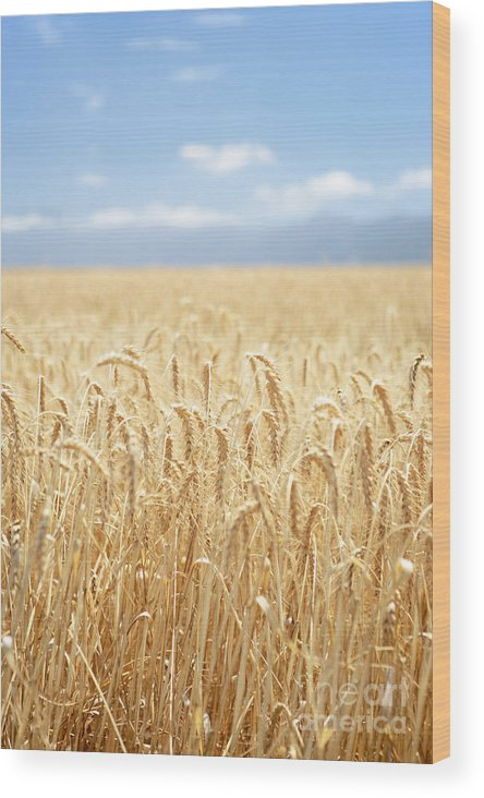 Wheat Wood Print featuring the photograph Wheat Field by Neil Overy