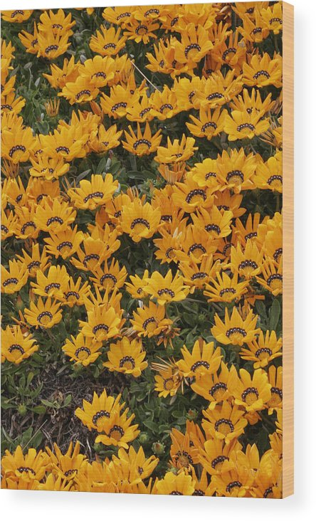 Flower Wood Print featuring the photograph Flower by Masami Iida