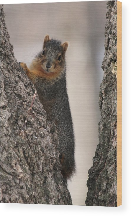 Squirrel Wood Print featuring the photograph Squirrel by Lori Tordsen