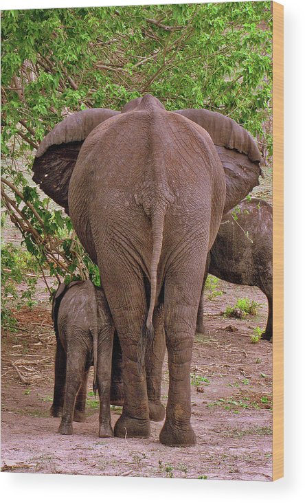 Botswana Wood Print featuring the photograph Botswana by Paul James Bannerman