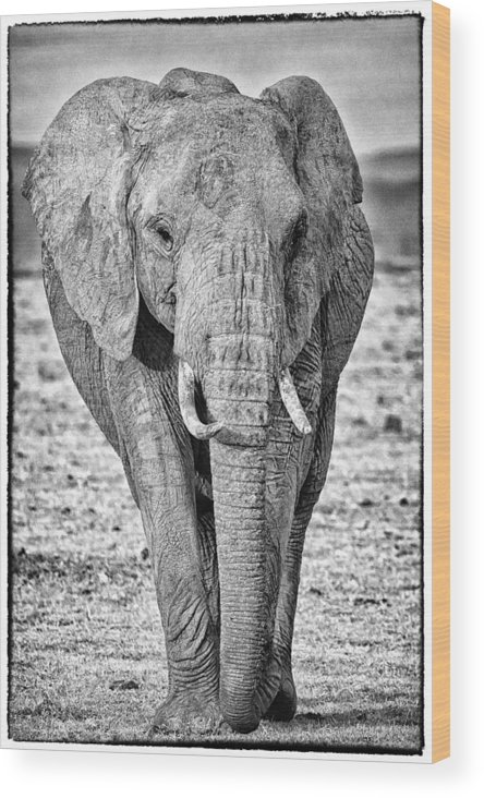 Africa Wood Print featuring the photograph African Elephants In The Masai Mara by Perla Copernik