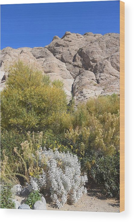 Whitewater Wood Print featuring the photograph Desert Landscape by Lisa Dunn