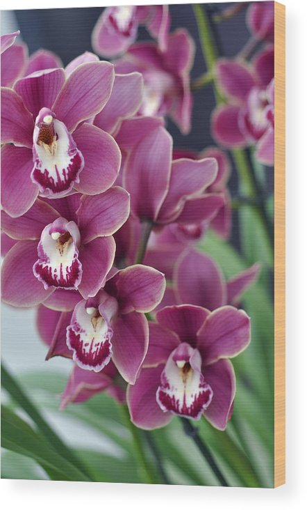 Wood Print featuring the photograph Orchids by LS Photography