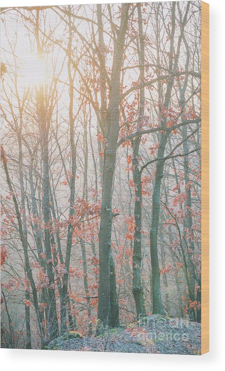 Landscape Wood Print featuring the photograph Autumn Forest by Jelena Jovanovic
