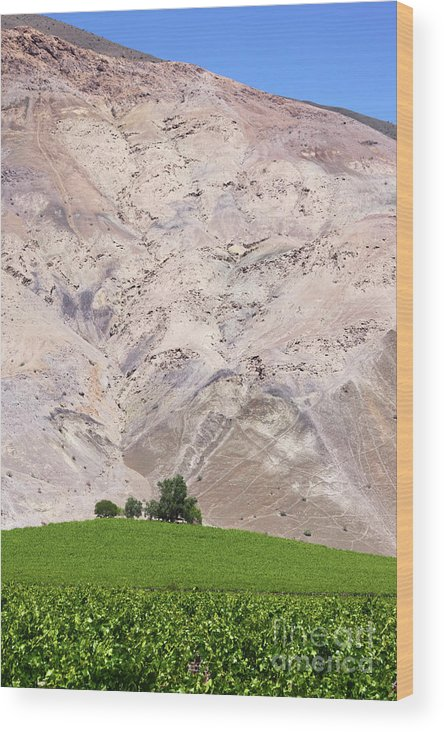 Chile Wood Print featuring the photograph Vines In The Atacama Desert Chile by James Brunker