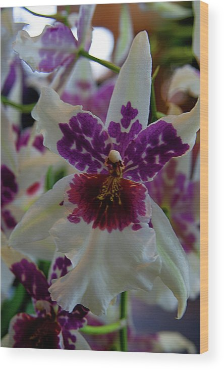 Orchid Wood Print featuring the photograph Orchid by Laurie Prentice
