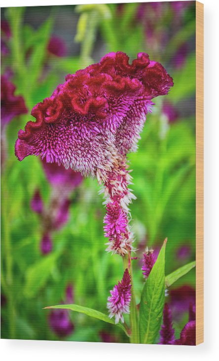 University Circle Wood Print featuring the photograph 4390- Flower by David Lange