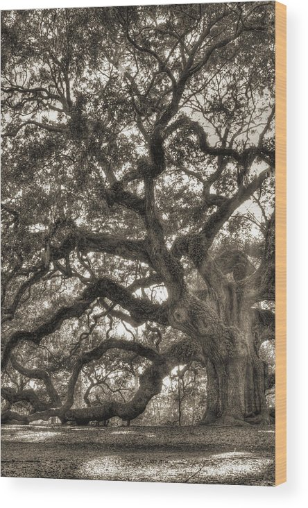 Angel Oak Wood Print featuring the photograph Angel Oak Live Oak Tree by Dustin K Ryan