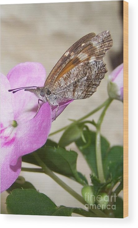 Wood Print featuring the photograph Butterfly by Randy Mass