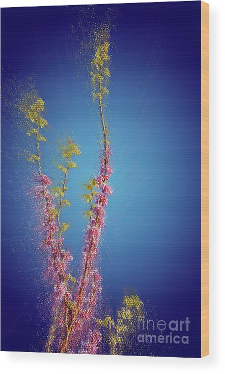 Judas Wood Print featuring the photograph Judas Tree Cercis Siliquastrum by Humourous Quotes