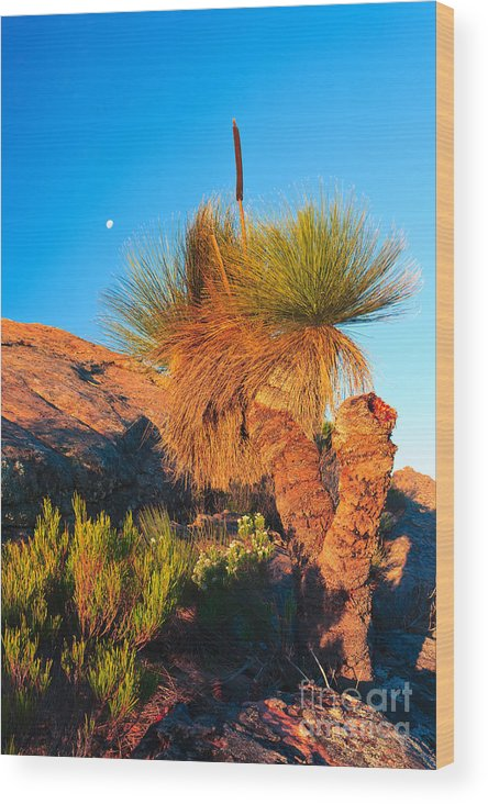 Wilpena Pound St Mary Peak Filinders Ranges South Australia Australain Landscape Landscapes Outback Moon Xanthorhoea Wood Print featuring the photograph Wilpena Pound by Bill Robinson