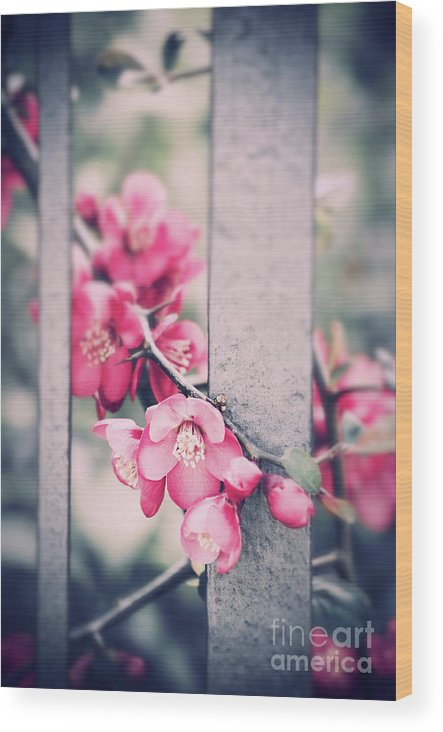 Spring Wood Print featuring the photograph A Delicate Spring by Silvia Ganora
