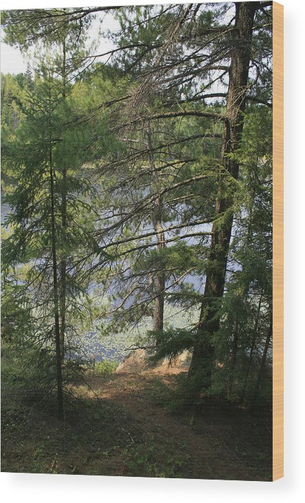 Photography Wood Print featuring the photograph A Place To Wander by Alan Rutherford