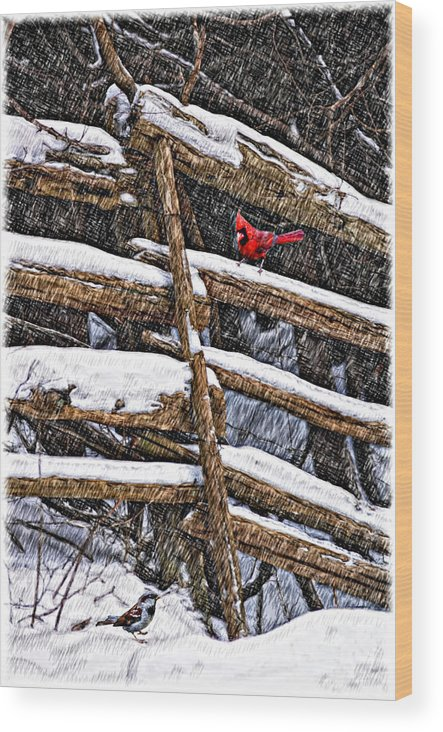 Winter Wood Print featuring the photograph A Winter Moment by Steve Harrington