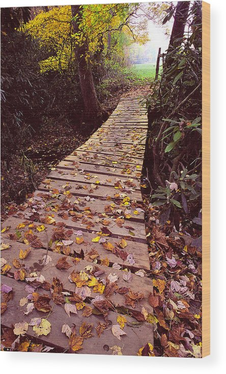 Woodland Walk Wood Print featuring the photograph Across The Footbridge by Alan Lenk