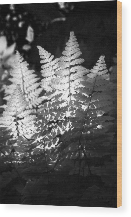 Fern Wood Print featuring the photograph After Glow by Randy Oberg