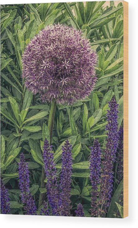 Alium Wood Print featuring the photograph Alium by Diane Moore