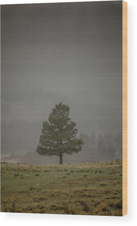 Landscape Wood Print featuring the photograph Alone In The Mist by Teresa Wilson