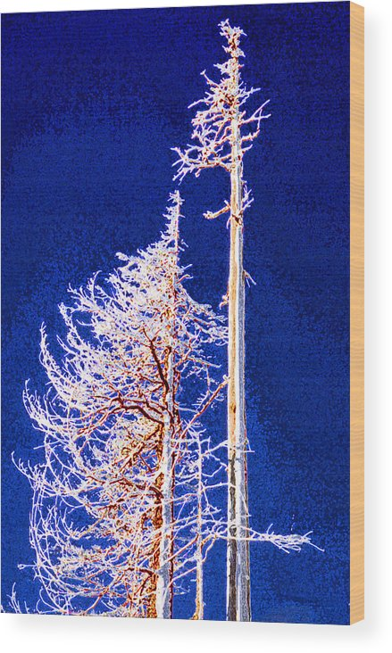 Alpine Wood Print featuring the photograph Alpine Snowy Trees 2 Pddbae2 by Lyle Crump