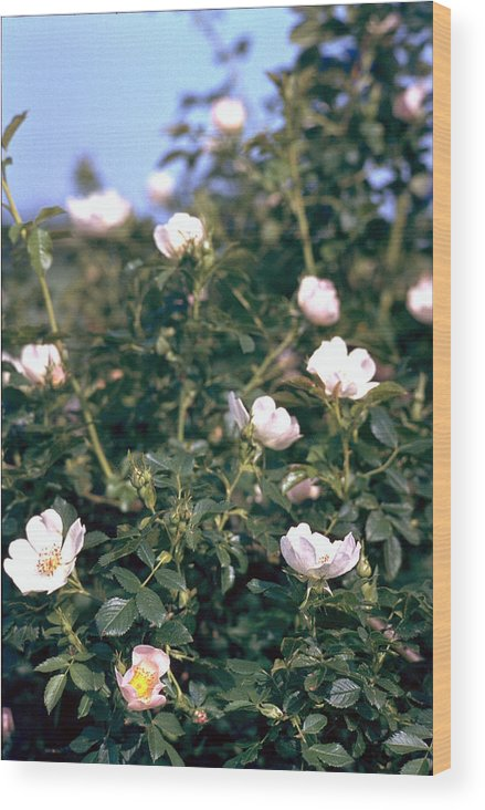 Anemone Wood Print featuring the photograph Anemone by Flavia Westerwelle