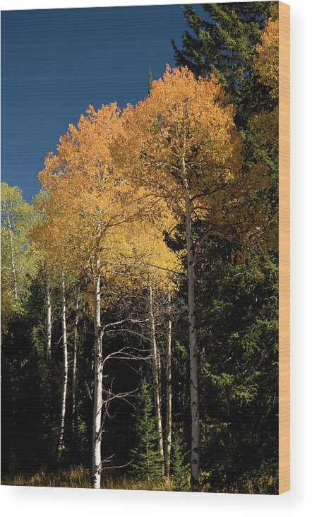 Grand Teton Wood Print featuring the photograph Aspens And Sky by Steve Stuller