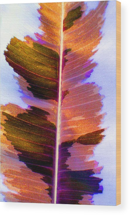 Pink Wood Print featuring the photograph Autumn Abstract by Carolyn Stagger Cokley