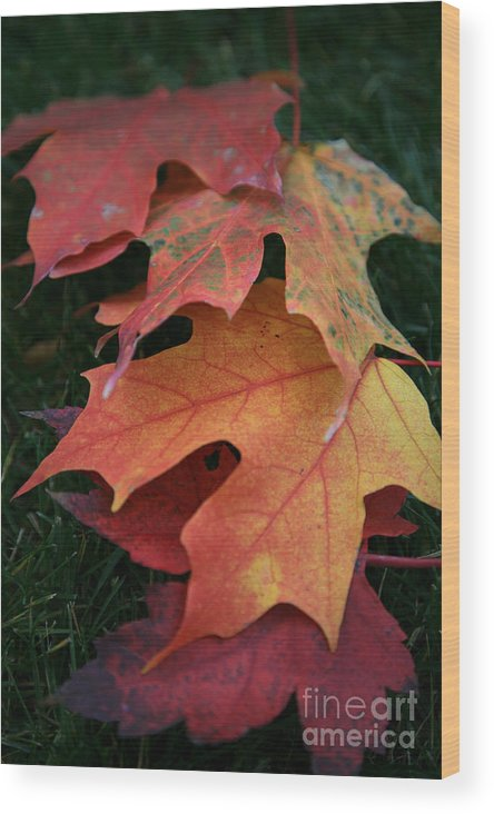 Autumn Wood Print featuring the photograph Autumn Leaves by Timothy Johnson