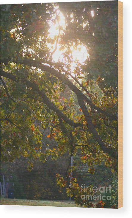 Autumn Wood Print featuring the photograph Autumn Morning Glow by Nadine Rippelmeyer