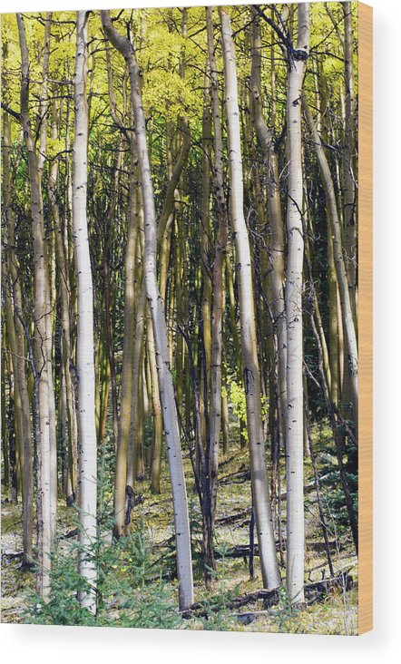 Fall Wood Print featuring the photograph Autumn Stand by Jim Norwood