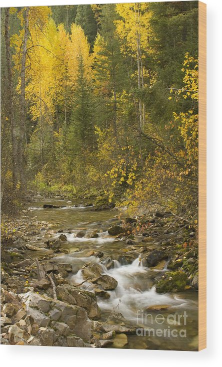 Idaho Wood Print featuring the photograph Autumn Stream by Idaho Scenic Images Linda Lantzy
