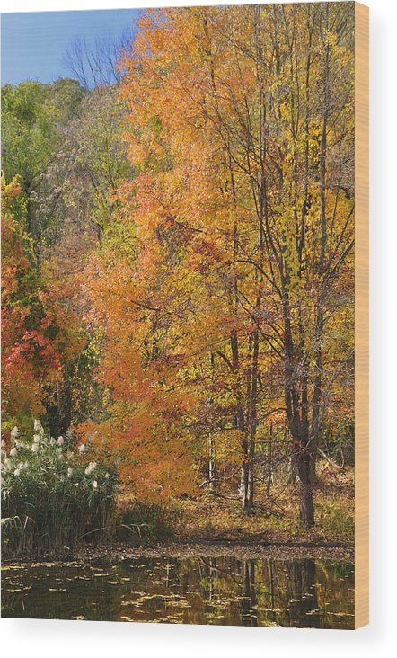 Fall Wood Print featuring the photograph Autumn Tranquility 4 by Frank Mari