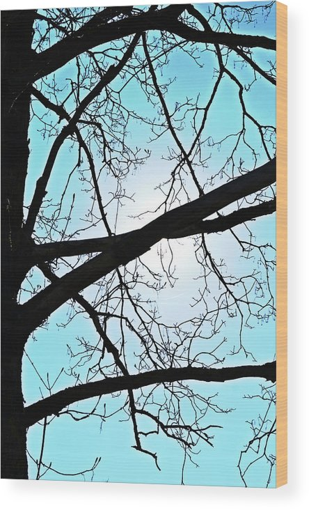 Backlit Wood Print featuring the photograph Backlit Tree by Tinto Designs
