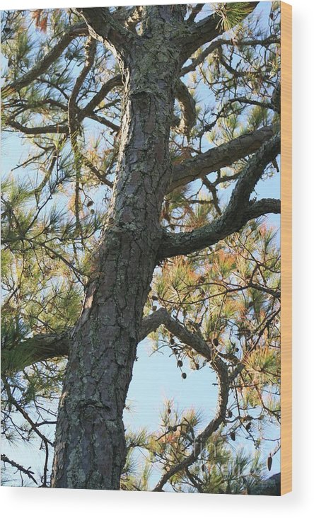 Tree Wood Print featuring the photograph Bald Head Tree by Nadine Rippelmeyer