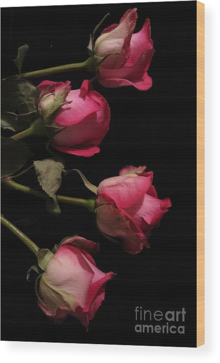 Floral Wood Print featuring the photograph Beautiful Two Tone Roses 4 by Tara Shalton