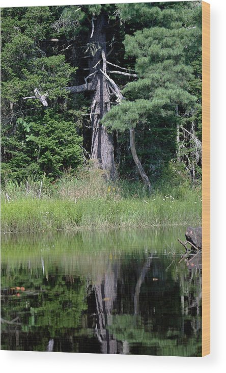 Water Wood Print featuring the photograph Big Ole Pine by Greg DeBeck