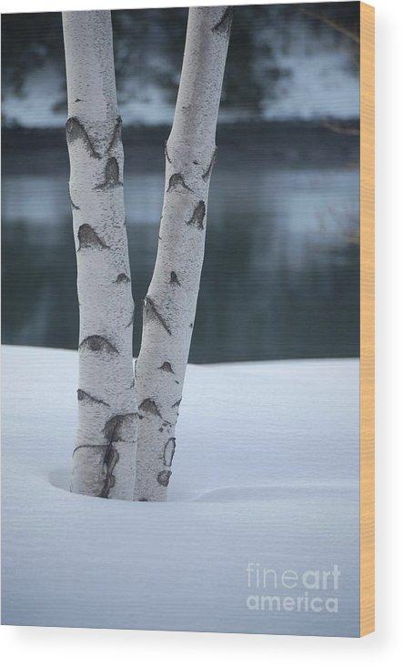 Birch Wood Print featuring the photograph Birch Twins In Snow by Faith Harron Boudreau
