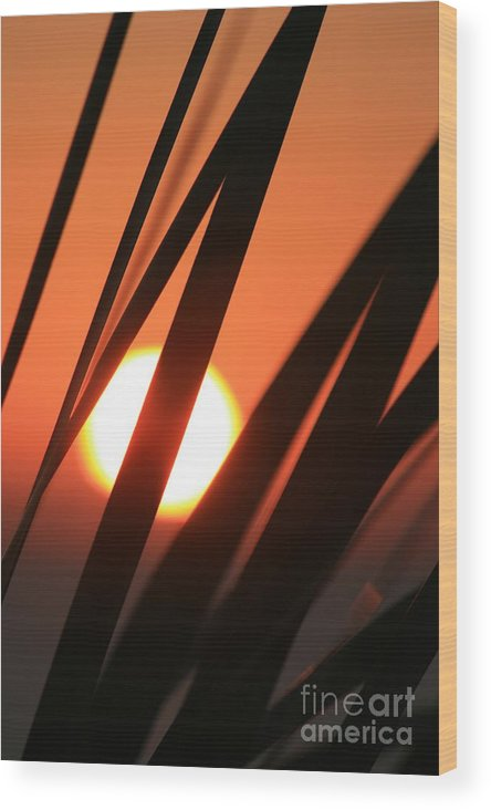 Sun Wood Print featuring the photograph Blazing Sunset And Grasses by Nadine Rippelmeyer