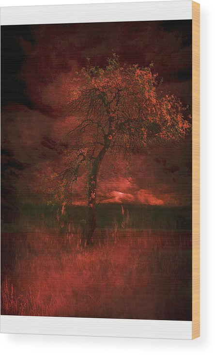 Wood Print featuring the photograph Bloody Tree by Zygmunt Kozimor