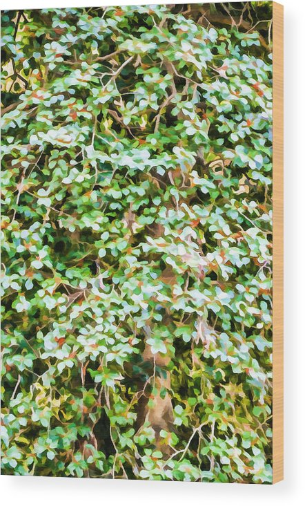 Bougainvillea Wood Print featuring the painting Blooming Shrubs by Jeelan Clark