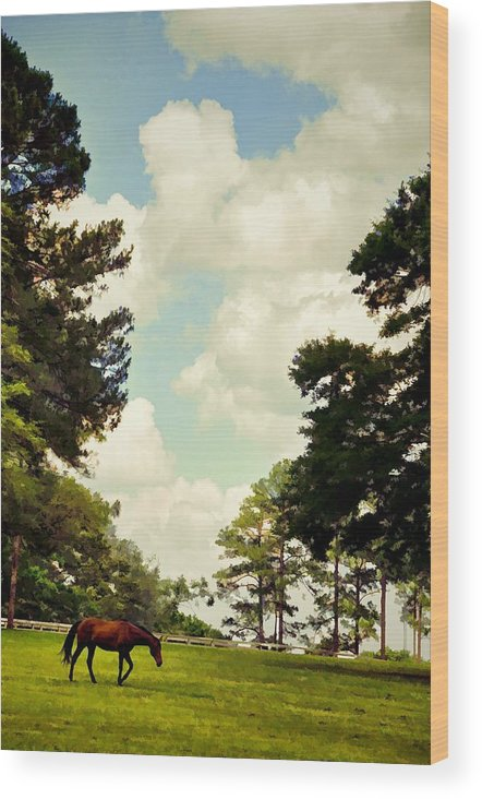 Landscapes Wood Print featuring the photograph Blue Skies And Pines by Jan Amiss Photography