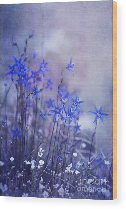 Yukon Bellflower Wood Print featuring the photograph Bluebell Heaven by Priska Wettstein